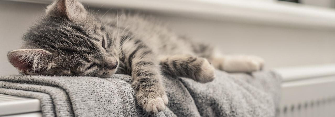 Katze liegt auf einer warmen Heizung dank Strom für Wärmepumpen und Speicherheizung